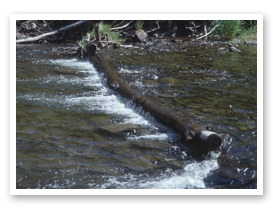 Logs used to stabilize a streambed in Eastern Oregon