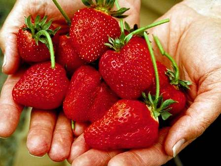 Strawberries (Oregon Department of Agriculture)