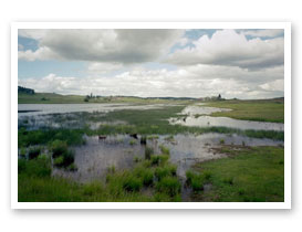 Baskett Slough Marsh