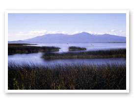 Klamath Lake Agency Marsh