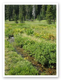 Montane wet meadow, Klamath County
