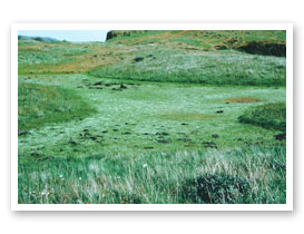Vernal pool, Rowena Plateau, Wasco County