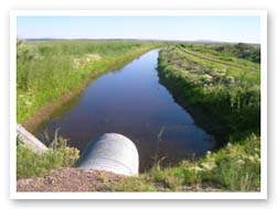 Natural channels have been filled with water diverted to manmade ditches; Burns, Oregon (Esther Lev, The Wetlands Conservancy)