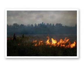 Using fire to suppress weeds and encourage growth of native seeds, Gotter Prairie, Hillsboro