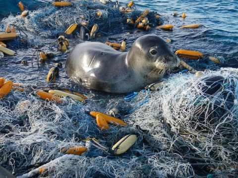 Picture of seal surrounded by coastal debris