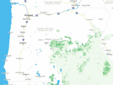 Screenshot of tree cover in rangelands map